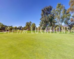 Golf_022