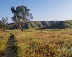 Land_022
